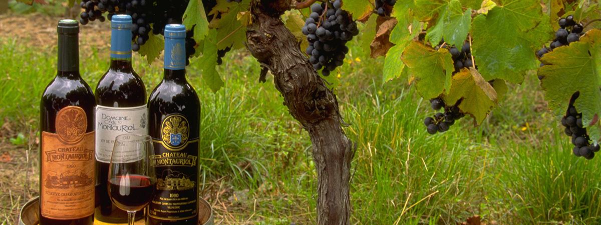 Vignobles en France : les vins de Fronton - Fronton wines - Vinos de Fronton