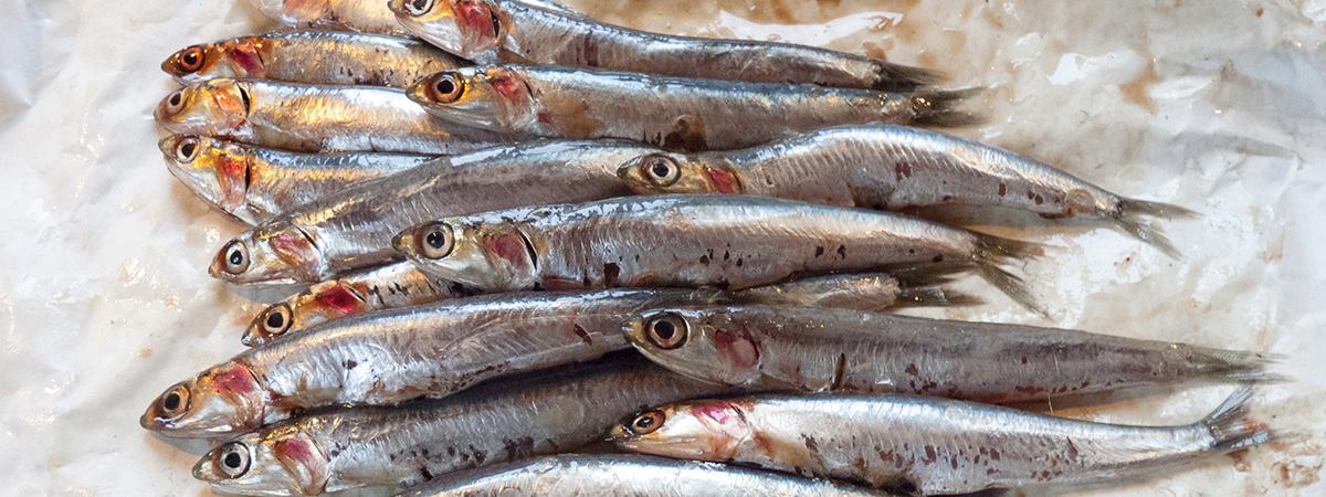 Les anchois de Collioure - Collioure anchovies - Las anchoas de Collioure