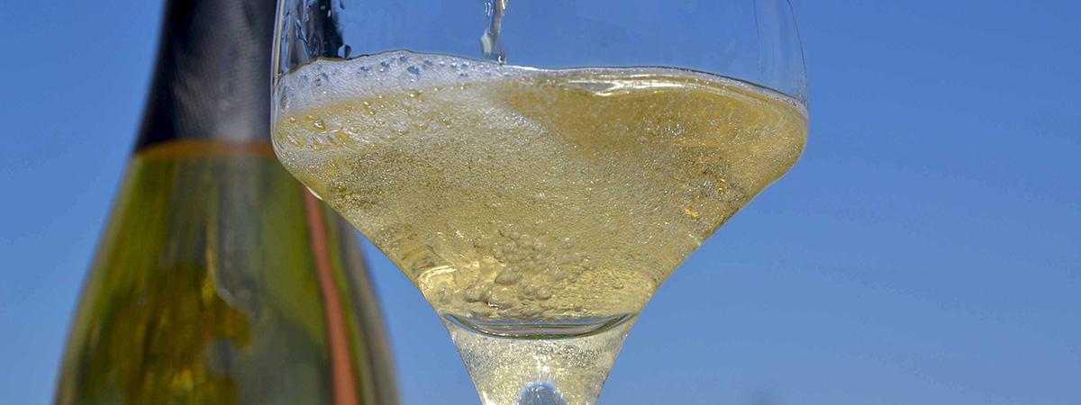Blanquette de Limoux : le vin mousseux de l'Abbaye de Saint-Hilaire