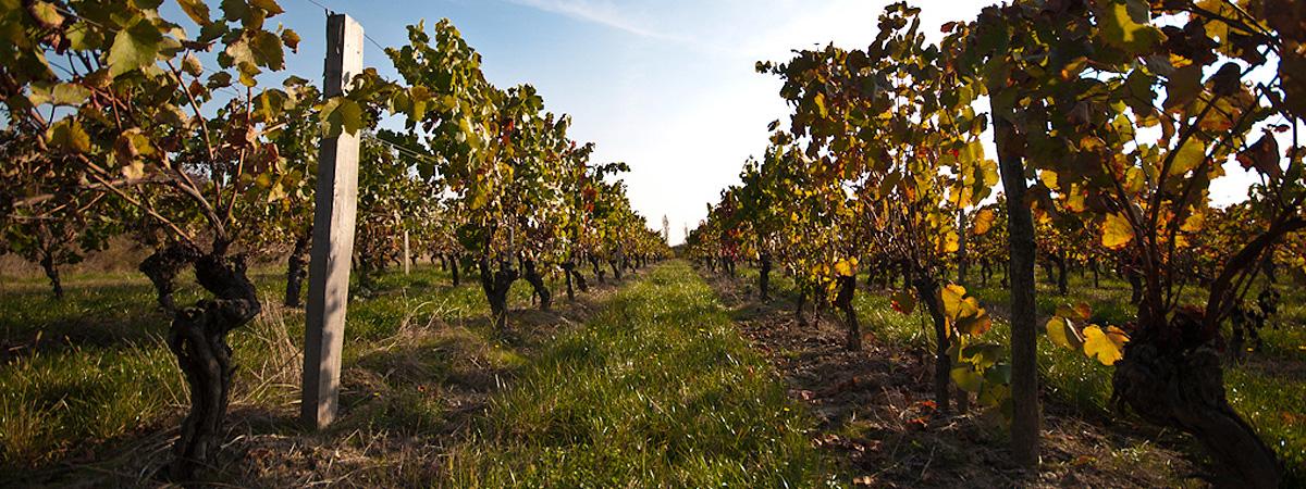Tourisme en France : vin et culture